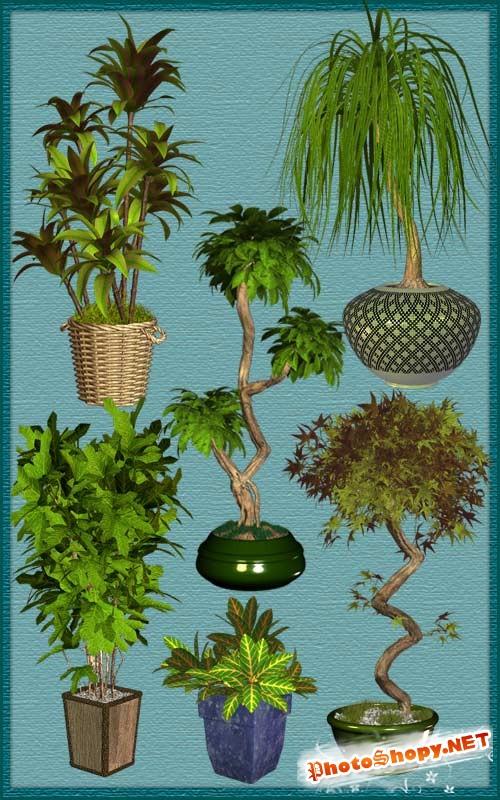 Клипарт - Экзотические деревья в горшках