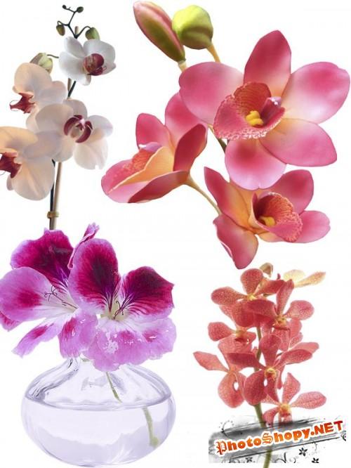 Орхидея - цветочный фотосток (часть вторая)