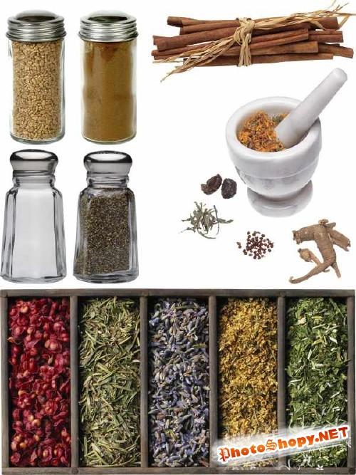 Специи (корица, перец, горчица, соль, мускат и т.д)- подборка стоковых изображений