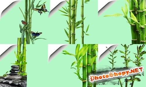 Клипарт для Photoshop - Прикольный бамбук