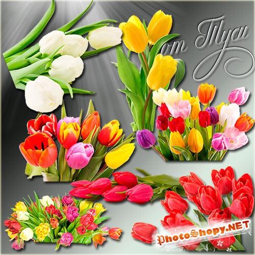 Клипарт - Тюльпаны поют о весне