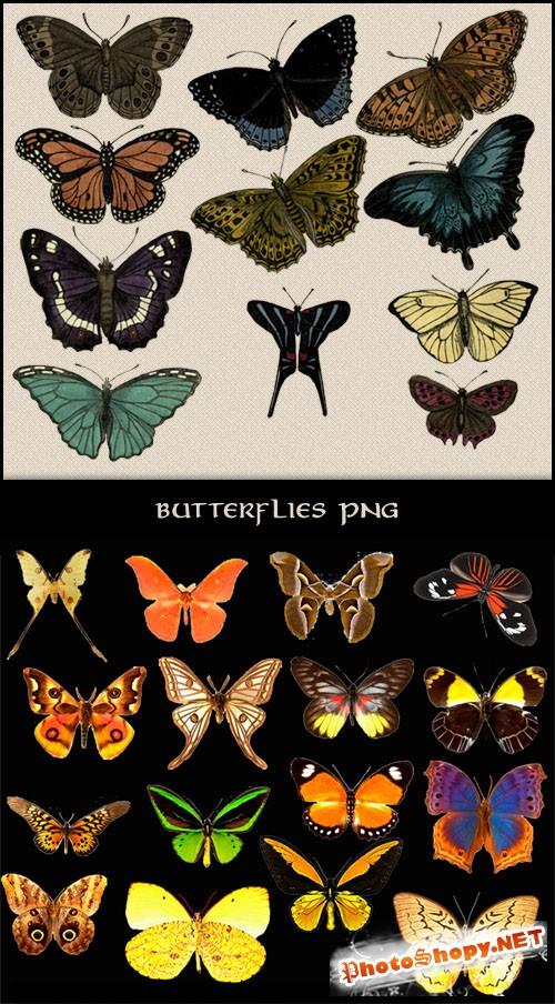27 Butterflies Clipart PSD Template