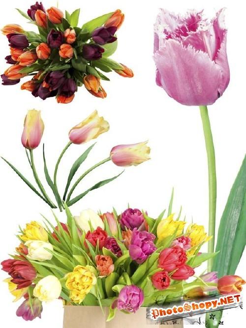 Тюльпаны - цветочный фотосток (часть первая)