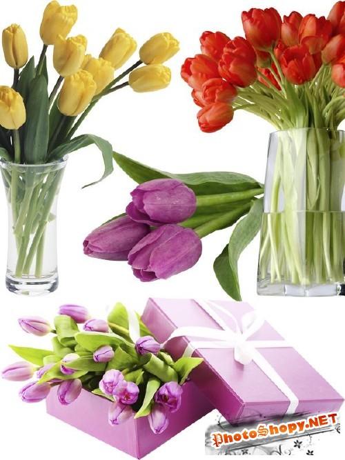 Тюльпаны - цветочный фотосток (часть третья)