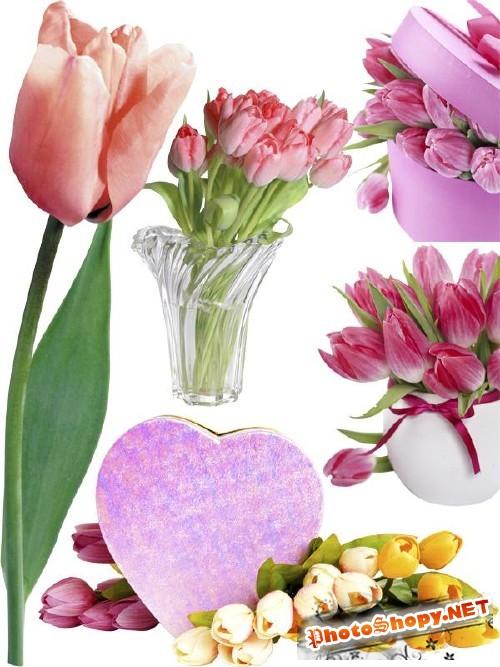 Тюльпаны - цветочный фотосток (часть вторая)