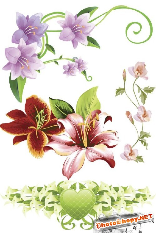 Лилии рисованные - цветочный фотосток