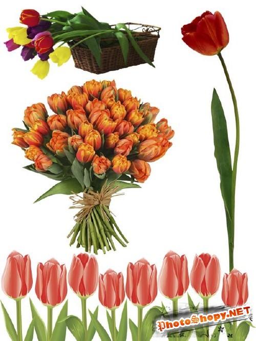Тюльпаны - цветочный фотосток (часть пятая)
