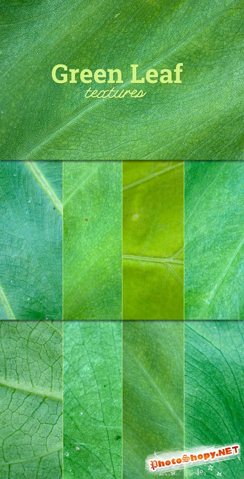 WeGraphics - Green Leaf Texture Set