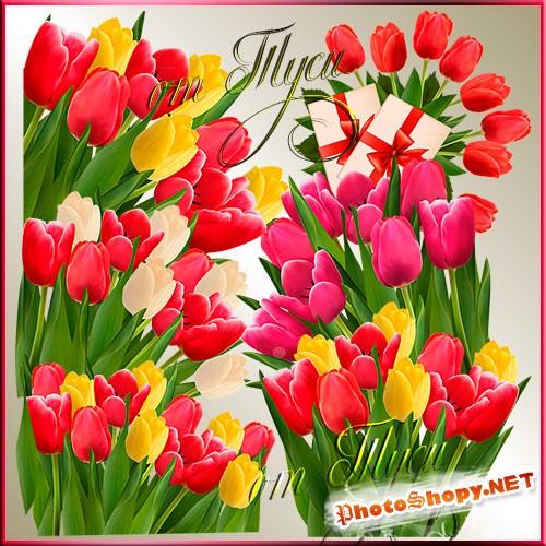 Клипарт - Букеты ярких тюльпанов
