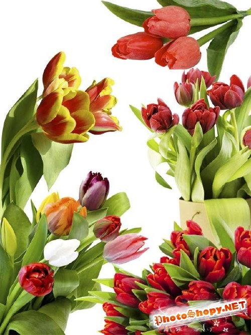 Тюльпаны - цветочный фотосток (часть четвертая)