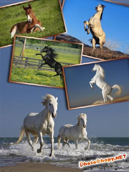 Прекрасные кони и лошади (фотосток часть вторая)