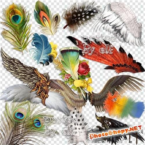Клипарт png на прозрачном фоне - Перья и крылья