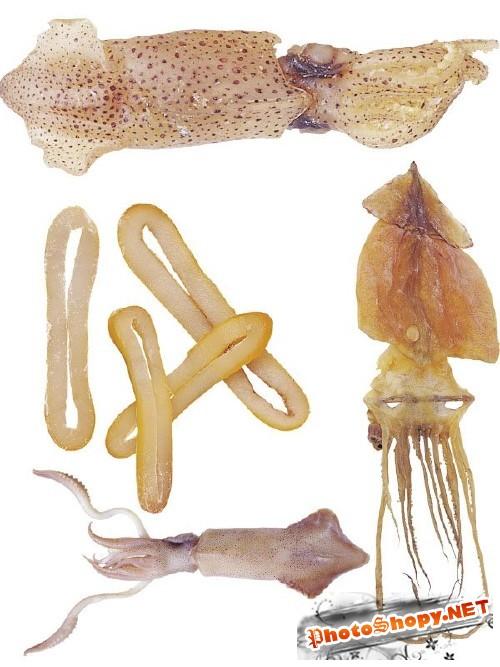 Фотосток: Кальмары живые и сушеные