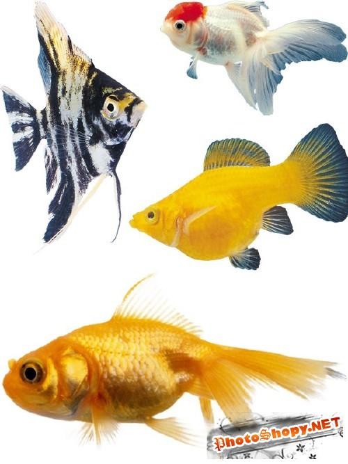 Подводный мир: Аквриумные рыбки