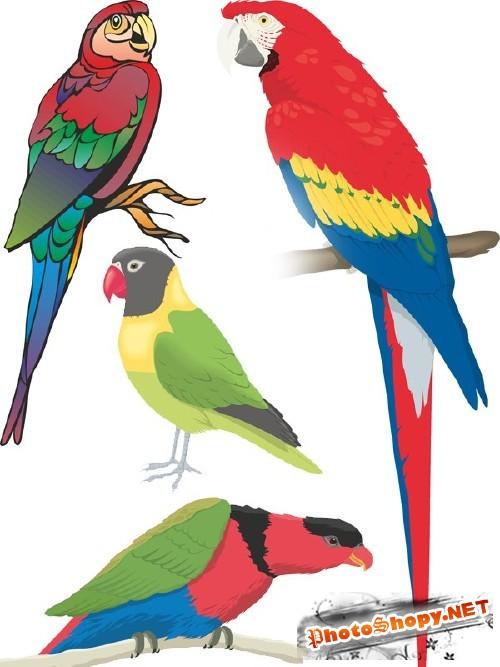Векторный сток: птицы - попугаи