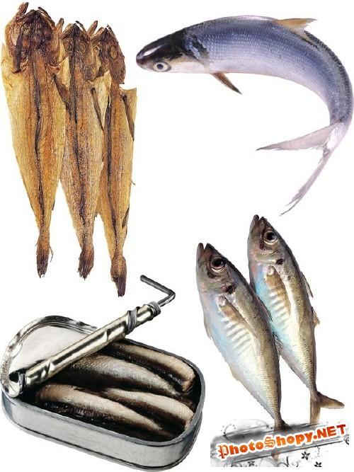 Рыба замороженная, сырая, сушеная и вяленая