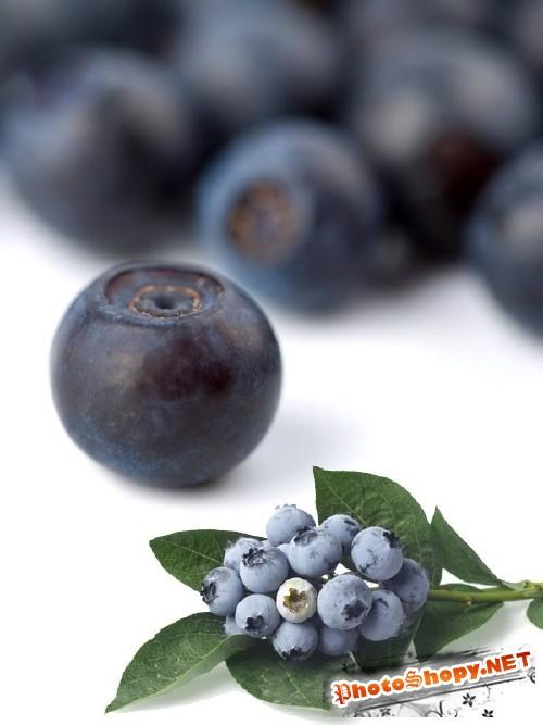 Лесные ягоды: Черника